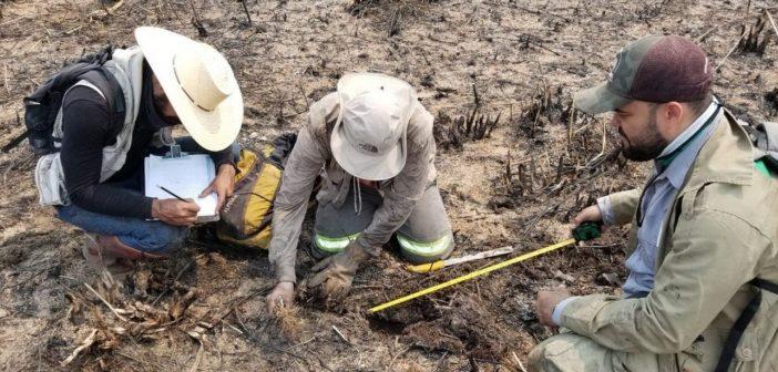 Pantanal: Força-tarefa investiga número de animais mortos após queimadas